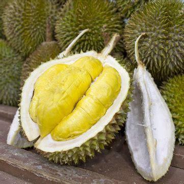 Durian 5pcs egrow 5pcs bag durian tree seeds delicious king of fruit