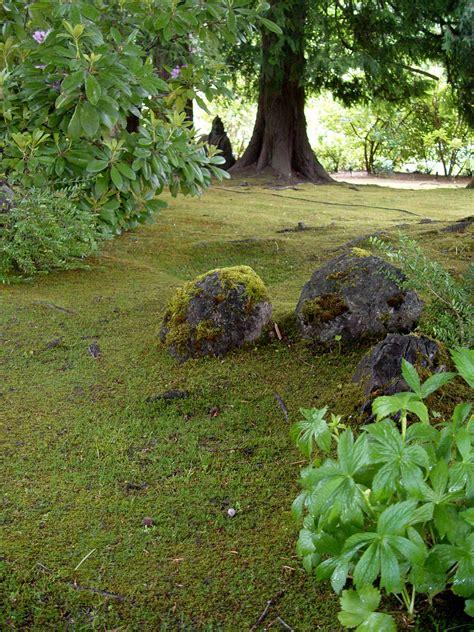 kill moss garden housecalls