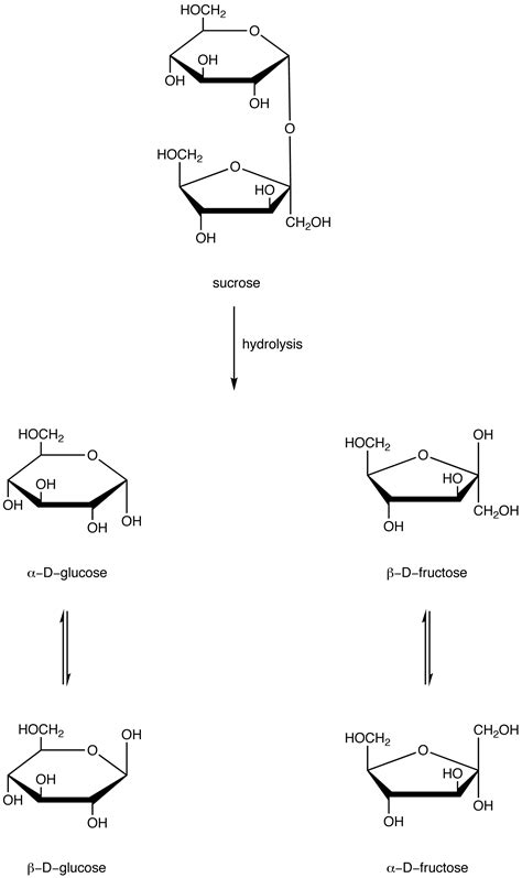 carbohydrates oligosaccharides oligosaccharides chemwiki