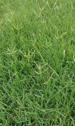 tulsa lawn care 101 what kind of grass do i have