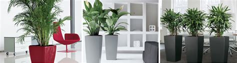 plants for the office indoor plants blooms productivity in business homes
