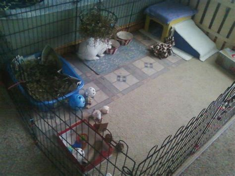 indoor garden for rabbits 125 best images about bunny time on rabbit