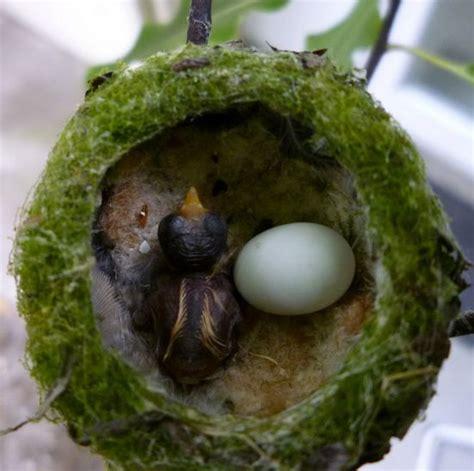 486 best bird nests images on pinterest beautiful birds