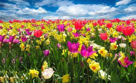 casa di fiori fiori