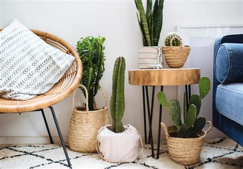 Easy Planter Ideas by 3 Easy Planter Ideas When You Re Lazy To Repot A Pair A Spare