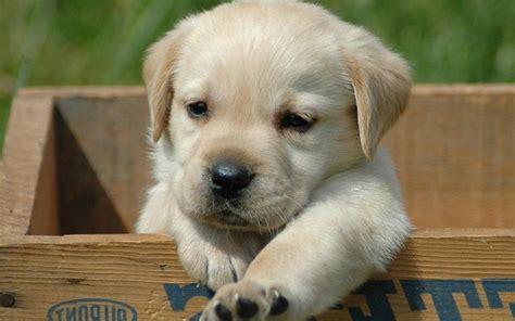 los perros magicos de 0892391294 como nacen los perros donde viven como nacen