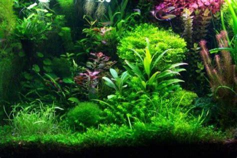 Saltwater Aquascaping Aquarium Plants Aquarium Cares