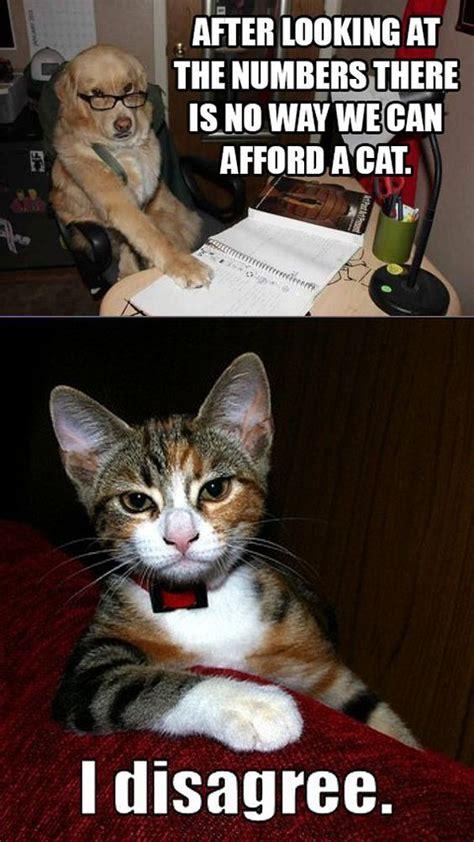 cat  dog memes    funny viral slacker