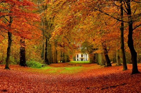 fall house house in autumn park forests nature background