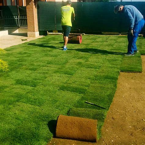 tappeto erboso a rotoli prato a rotoli tappeto erboso zolle d erba produzione