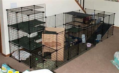 Clear C Effector Ex Set Default nic cage binkybunny house rabbit information forum