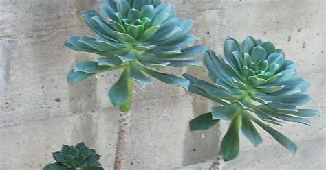 piante ricanti per terrazzo gelsomino terrazzo 28 images piante ricanti da balcone