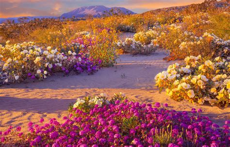 super bloom anza borrego 2017 california desert superbloom earth earthsky