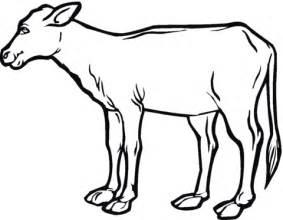 cow ears coloring page dibujos de terneros para colorear imagui