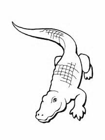 alligator coloring pages free printable alligator coloring pages for