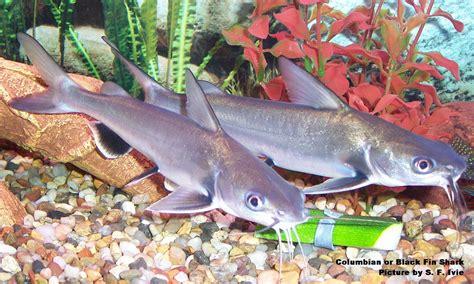 baby shark lyre pinterest the world s catalog of ideas
