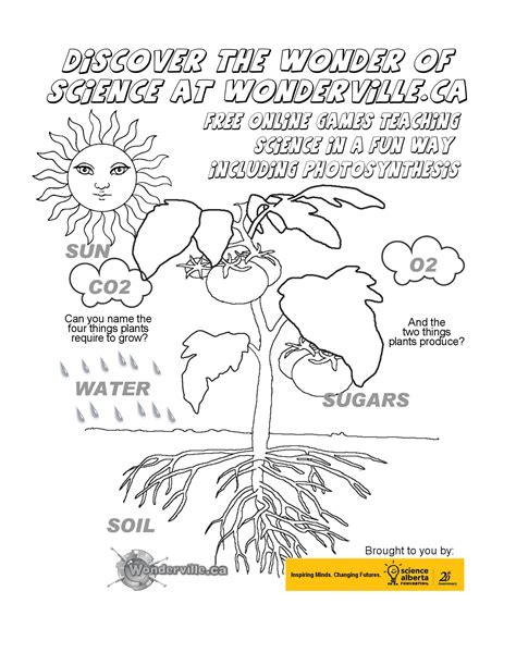 Photosynthesis Worksheet by Kidsafe Puzzles
