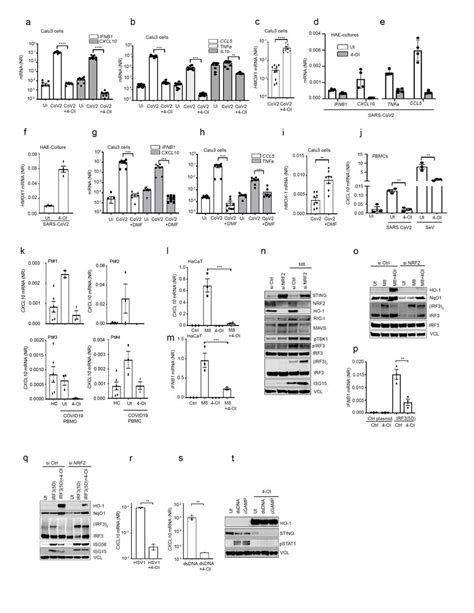 4-OI and DMF limit SARS-CoV2 and HSV induced inflammatory