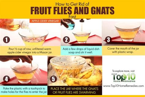 Get Rid Of Gnats In Kitchen by How To Get Rid Of Fruit Flies And Gnats Fast Apple Cider