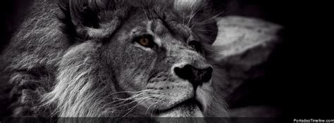 imagenes de leones para portada de facebook portadas para facebook im 225 genes taringa