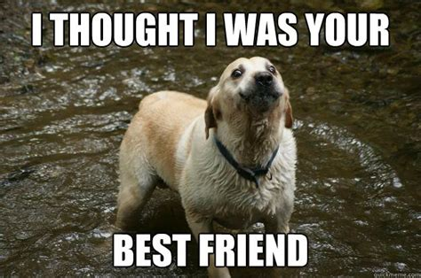 Memes About Best Friends - 37 very funny exercise memes graphics gifs images