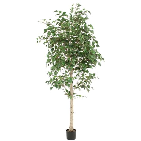 steins artificial trees 7 potted white birch tree unfluffed in import free shipping in usa 1001shops