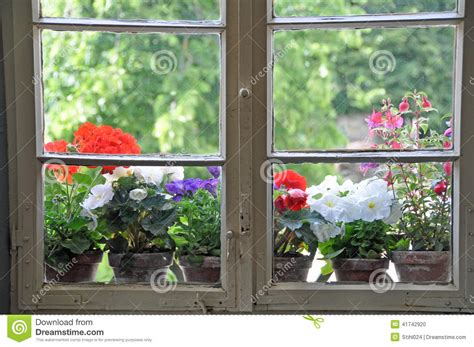 Flower Pots On Window Sills Flower Pots On Window Sill Stock Photo Image 41742920