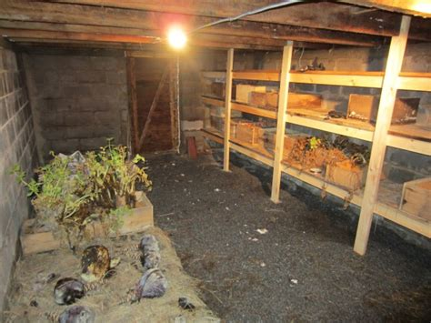 match in the root cellar how you can spark a peak performance culture books the 8 fundamentals to digging a root cellar the grid