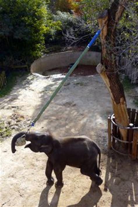 elephant enrichment ideas images elephant zoo