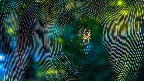 spinnen fernhalten wohnung spinnen fernhalten mit dieser pflanze kommen spinnen