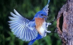 aves wiki reino animalia