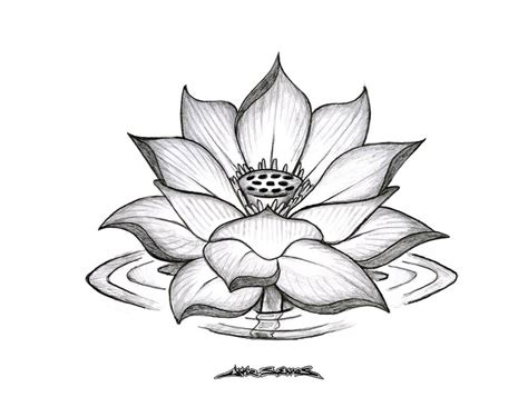 lotus flower tattoo designs beautiful lotus flower by muddygreen on deviantart