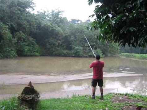 catch and release snake fish haruan doovi
