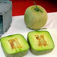 melones cuadrados cienciaes cierta ciencia podcasts de ciencia