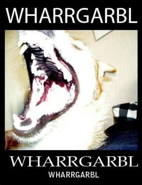 Dog Sprinkler Meme - image 32398 wharrgarbl sprinkler dog know your meme
