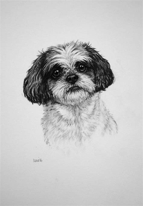 shih tzu drawing 17 best images about irvine for sale dogs horses wildlife on
