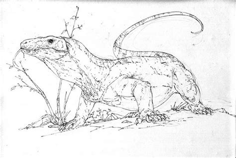 coloring pages of komodo dragon komodo colouring pages