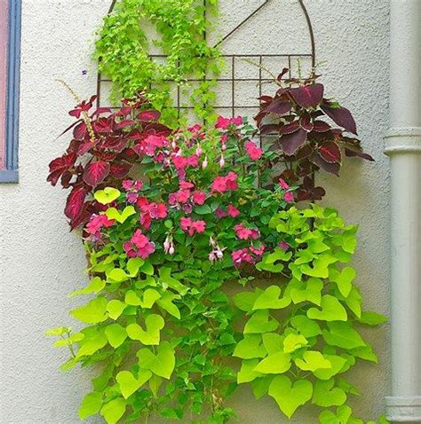 facing climbing plants wall planter a facing wall is softened by this