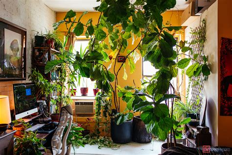 Bedroom Tree Plants My 1200sqft Inside Summer Oakes Williamsburg Oasis