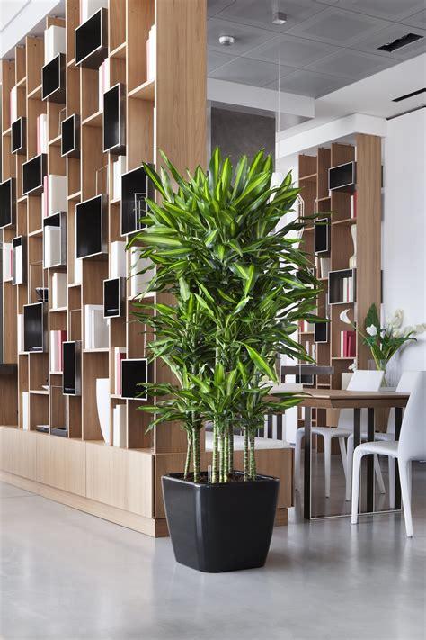 piante da arredo interno piante da arredo idee per il design della casa