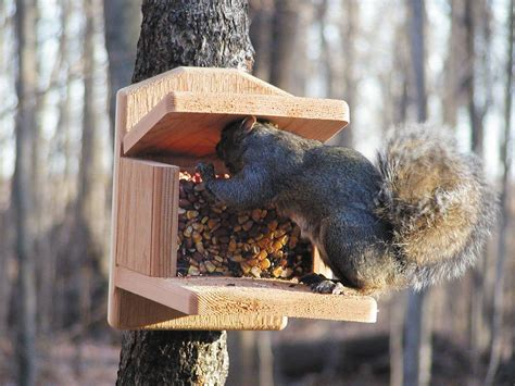 Squirrel Feeder squirrel feeders
