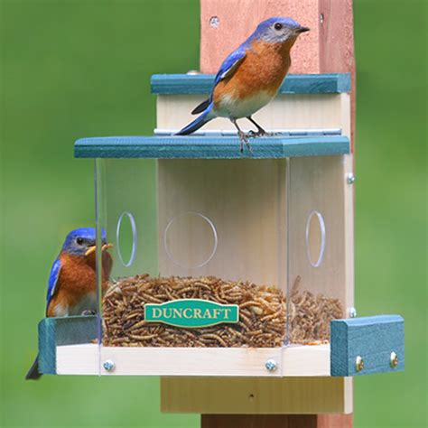 Bluebird Feeder Duncraft Duncraft Clearview Bluebird Feeder