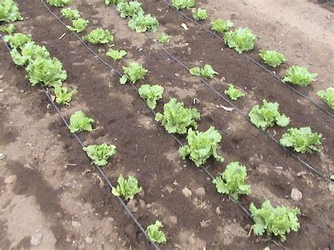 irrigazione giardino calcolo pannelli solari casa costo impianto irrigazione a goccia