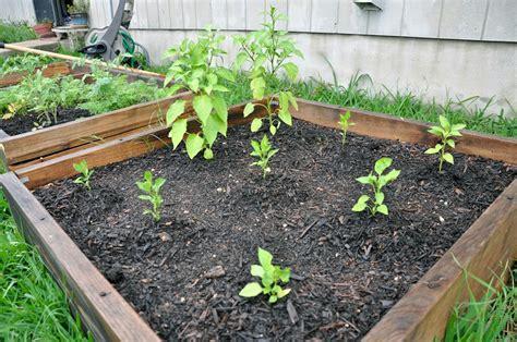 raised rock garden beds raised bed a rock garden