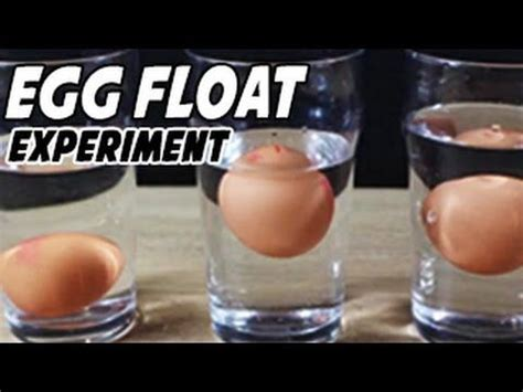 Egg Sinks In Water by 17 Best Science Experiments Images On Science