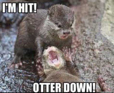 Funny Otter Meme - the otter war is beginning otter down pinterest