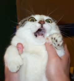 scary cat scary cat meme