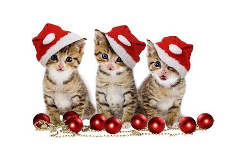 images of merry christmas kittens christmas balls merry christmas hat beautiful magic pretty