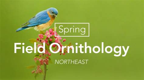 spring field ornithology northeast bird academy the