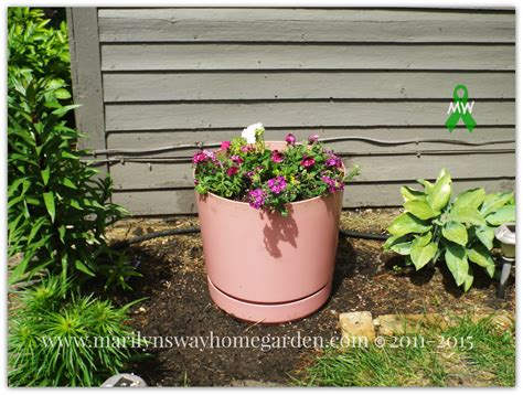 Large Planter Ideas by 9 Filler Ideas For Large Planters Marilyn K Foster
